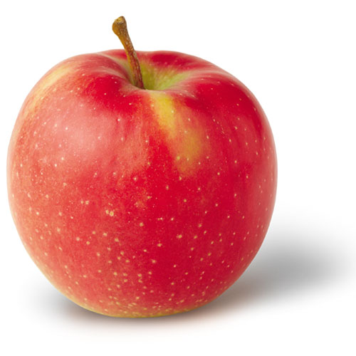 sadnice jabuke jonagold